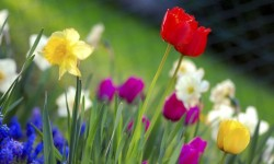 1024px-Colorful_spring_garden-490x325