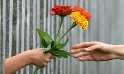 hand-1549224_1280